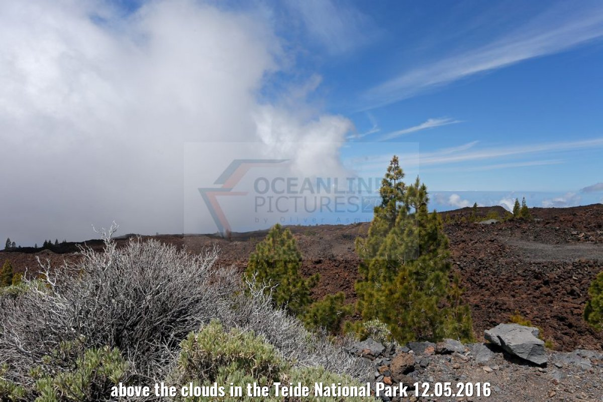 above the clouds in the Teide National Park 12.05.2016