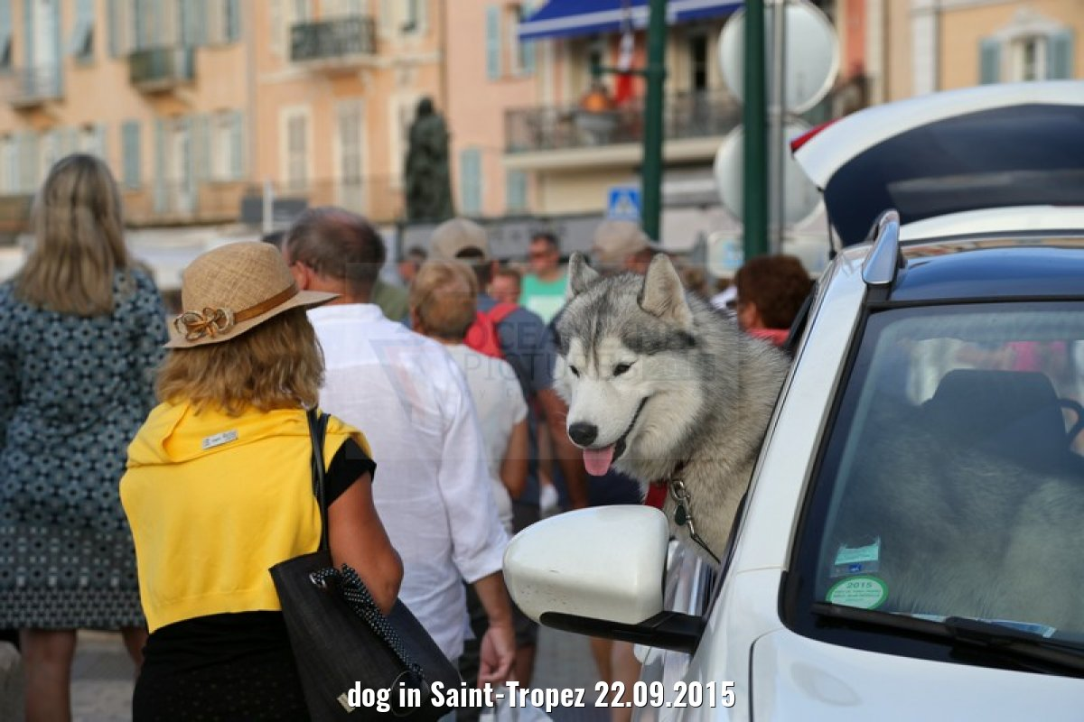 dog in Saint-Tropez 22.09.2015