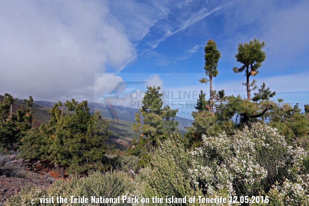 visit the Teide National Park on the island of Tenerife 12.05.2016