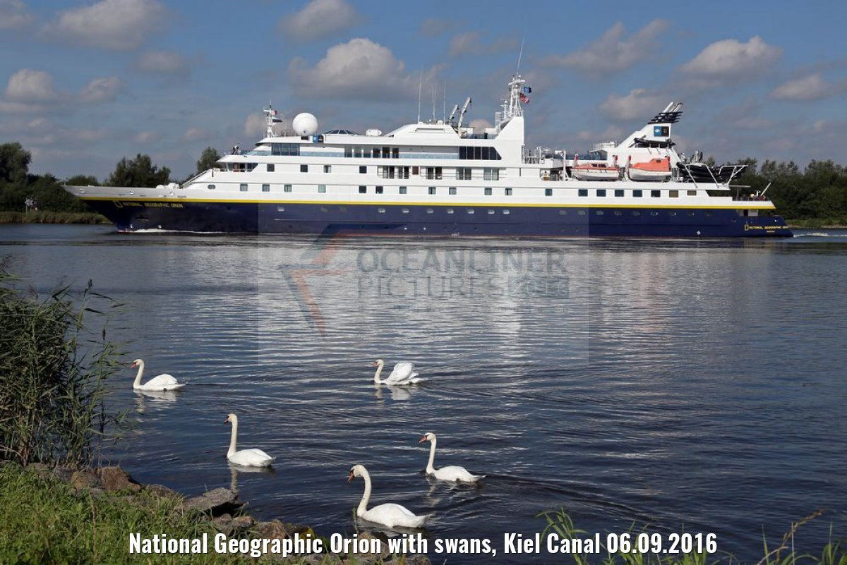 National Geographic Orion with swans, Kiel Canal 06.09.2016