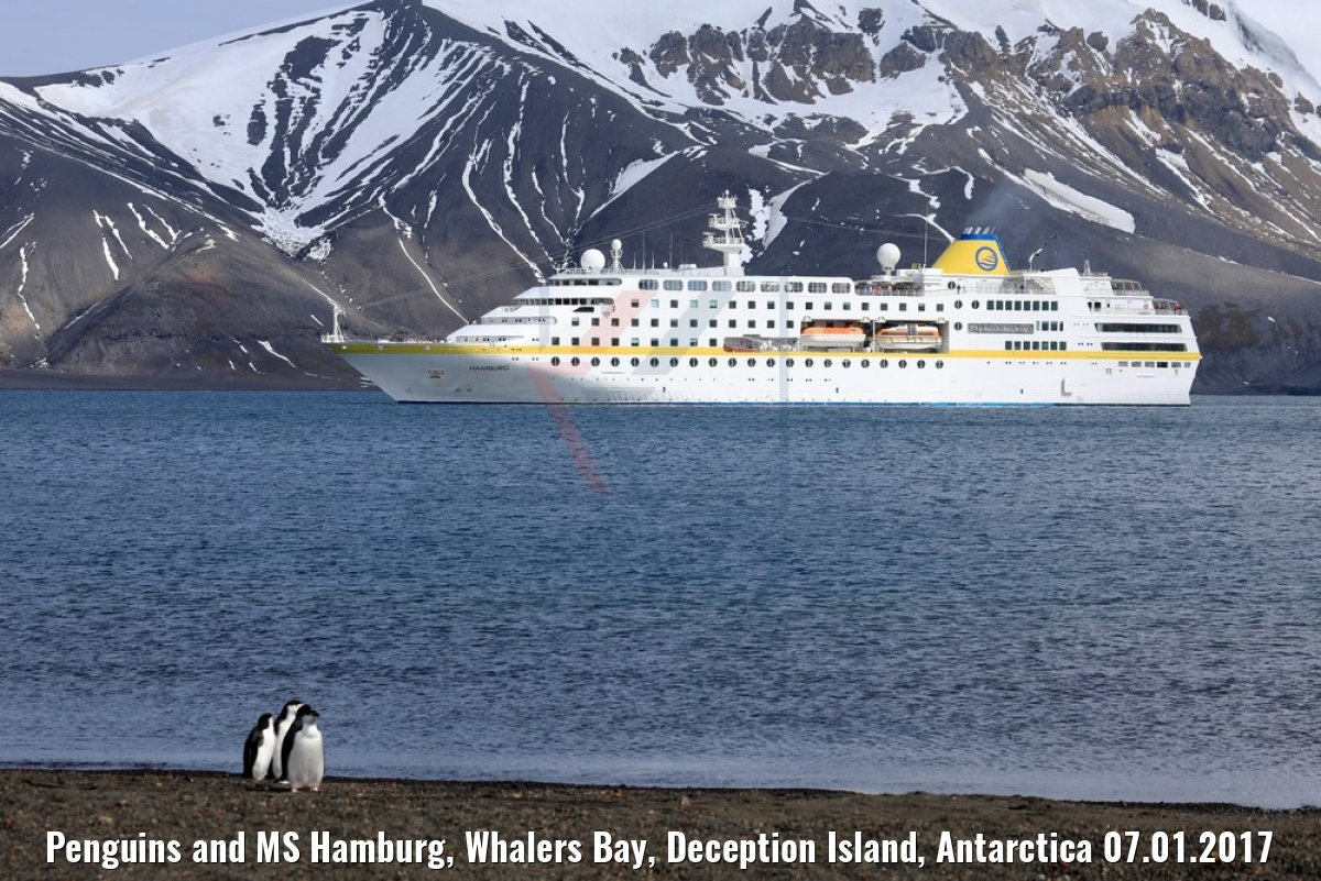 Penguins and MS Hamburg, Whalers Bay, Deception Island, Antarctica 07.01.2017