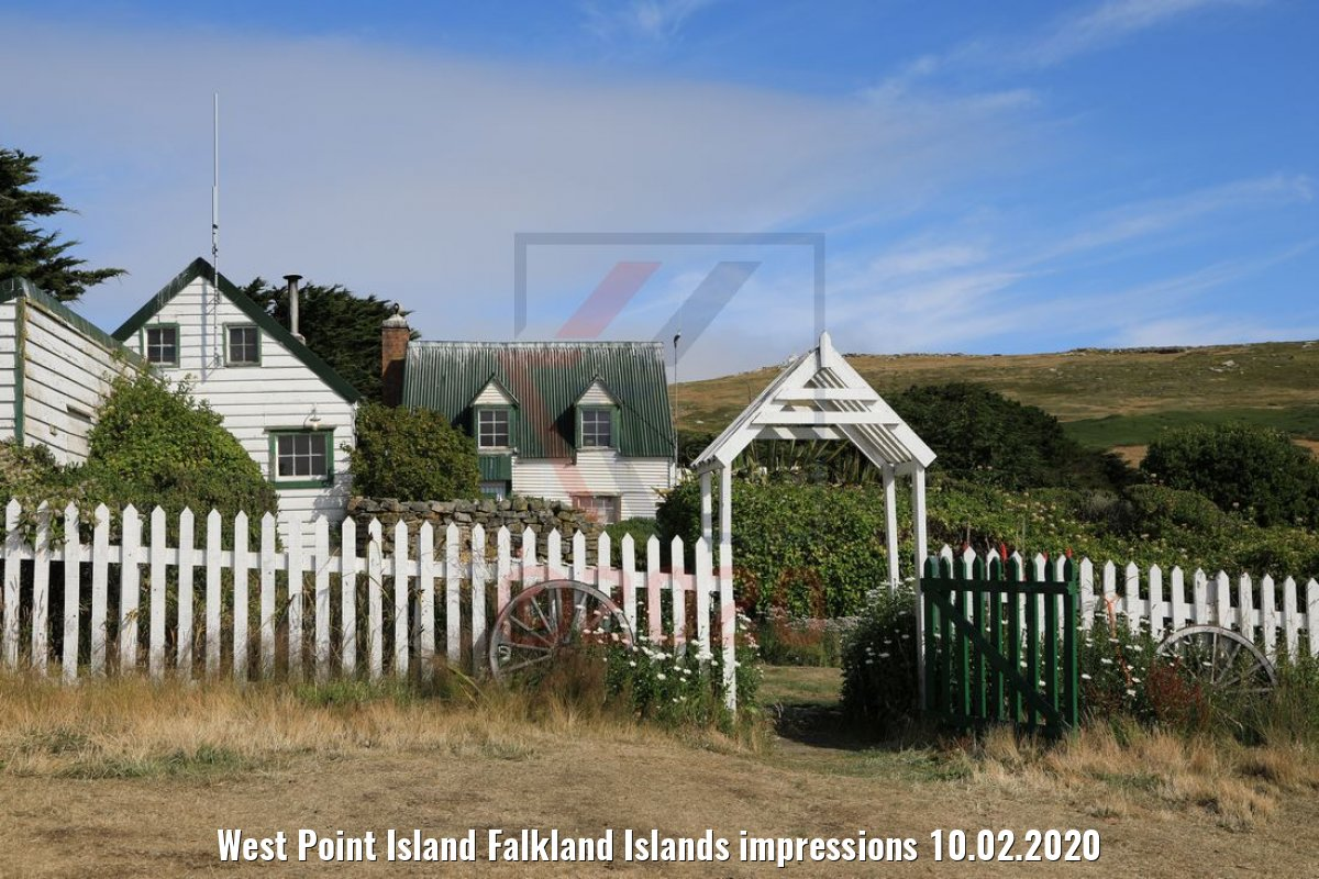 West Point Island Falkland Islands impressions 10.02.2020